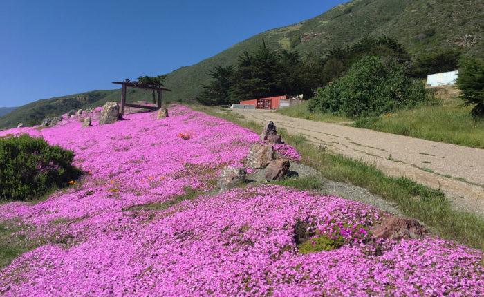 Экскурсия из Сан-Франциско в Монтерей