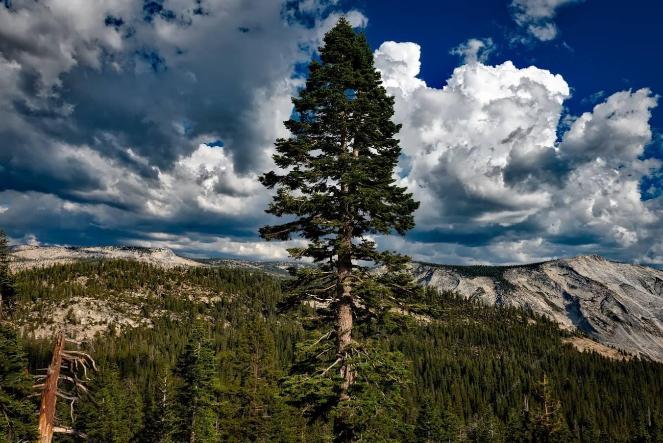 Экскурсия в Йосемитский национальный парк