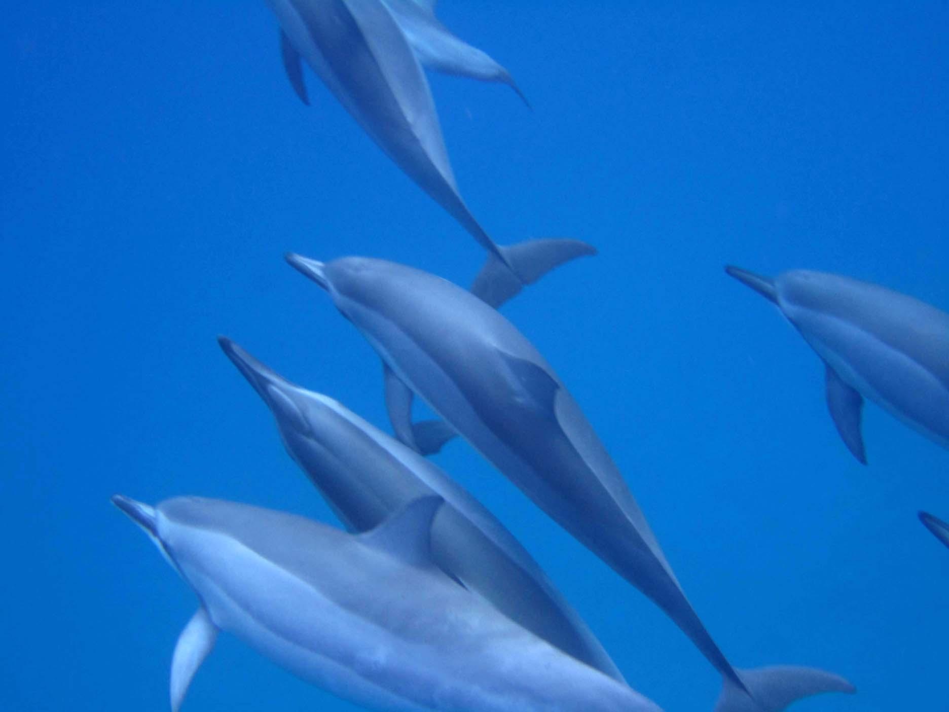 Тур Танец дельфина, Гавайи, Ноябрь, 2011